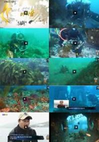 "KNN 테마 스페셜<br/>""바다 속, 생명이 움트는<br/>땅 바다 숲""<br/>2014년 10월 5일 방영"
